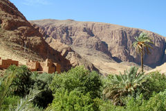 Oazy rzeczna dolina w suchej pustyni w afryce pólnocnej Obrazy Stock