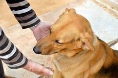 Obéissance de chien Images stock