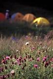 obóz dzikie kwiaty zdjęcia stock