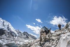 obóz Everest twarzą na północ Zdjęcia Royalty Free