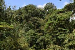 Obłoczna Lasowego baldachimu roślinność Zdjęcie Royalty Free