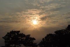 Obłoczni drzewa i słońce zdjęcie royalty free