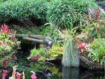 Obłoczni Lasowi przyciąganie ogródy Podpalanym natura parka Singapur zatoki Marina, Azja Obrazy Stock