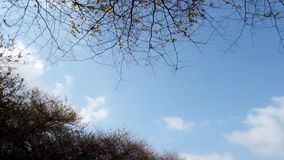 Obłoczny chodzenie nad suchy drzewa zwolnione tempo zbiory wideo