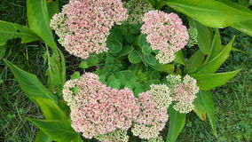 Obłoczny kwiat Obrazy Royalty Free