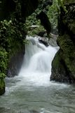 Obłoczny las, Mindo, Ekwador, wybrzeże pacyfiku dżungla, Ekwadorska Pacyficzna dżungla Fotografia Royalty Free