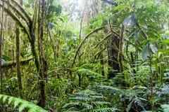 Obłoczny las w parku narodowym Volcan Bar, Panam obraz royalty free