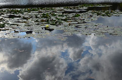 Obłoczny odbicie na jeziorze Obraz Royalty Free