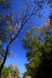 Ob Luang skog Royaltyfri Bild
