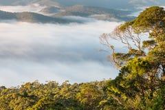 Obłoczna inwersja nad tropikalny tropikalny las deszczowy w Tamborine parku narodowym Zdjęcia Royalty Free