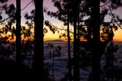 Obłoczne denne i lasowe sylwetki Fotografia Royalty Free