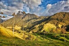 Obłoczni drzewka palmowe Salento Kolumbia Obraz Stock