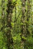 Obłoczny las Obraz Royalty Free