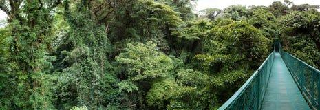 Obłoczny las w Costa Rica Zdjęcia Royalty Free