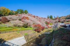 Obara, Aichi, Japão - 22 de novembro de 2016: Turista não identificado v Fotos de Stock