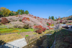 Obara, Aichi, Japan - November 22, 2016: Niet geïdentificeerde toerist v Stock Foto's