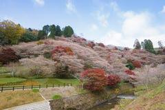 Obara, Aichi, Japan - November 22, 2016: Niet geïdentificeerde toerist v Royalty-vrije Stock Foto