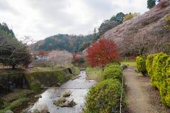 Obara, Aichi, Japan - November 22, 2016: Niet geïdentificeerde toerist v Stock Afbeelding