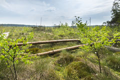 The Obary peat bog national reserve Royalty Free Stock Photos