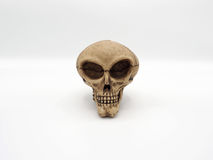 obca czaszka Obraz Royalty Free