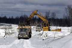 obciążenia na wyrąb drzew świerkowych ciężarówką Fotografia Royalty Free