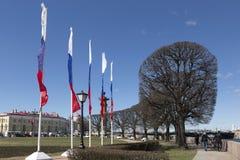 Obcięci drzewa na strzała Vasilievsky wyspa obrazy royalty free