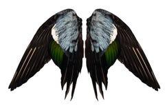 Obcięci istni kaczek skrzydła na biały tło odizolowywającym frontowym aniele dwa pary Obrazy Royalty Free