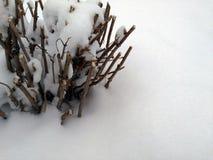 Obcięci krzaki w śniegu zdjęcia stock