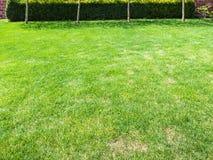 Obcięty gazon z zielonym żywopłotem na podwórku obraz royalty free