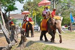 Obcokrajowów podróżniczy jeździeccy Tajlandzcy słonie objeżdżają w Ayutthaya Tajlandia Fotografia Stock