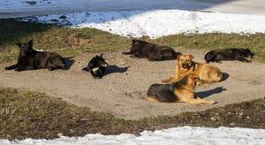 Obdachlose Hunde in der Winterzeitheizung auf sanitaryware Brunnen stray Stockfotografie