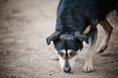 Obdachlose Hundenahaufnahme Stockfotos