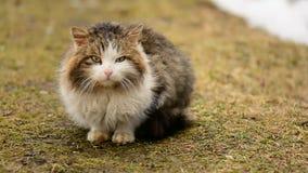 Obdachlose hungrige Katze, die auf dem Gras im Dorf sitzt tiere stock video footage