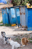 Obdachlose hungrige Katzen nahe den Abfalleimern Lizenzfreies Stockbild