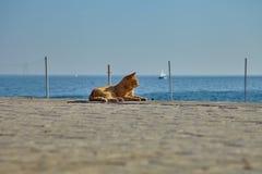 Obdachlose Ingwerkatze, die in der Sonne auf der Seeküste sich aalt lizenzfreies stockfoto