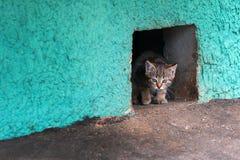 Obdachlose Kätzchenkatze, die von einem Kellerloch schaut Stockfotos