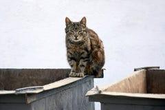 Obdachlose Katze auf dem Abfallbeh?lter lizenzfreies stockbild