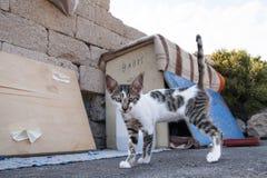 Obdachlose Katze auf der Straße Hungrige Katze, die in einer Pappschachtel lebt Stockfotos