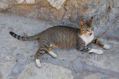 Obdachlose Katze in der Stadt von Sousse lizenzfreie stockfotos