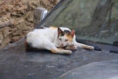 Obdachlose Katze in der Stadt von Sousse schlafend auf der Haube des Autos stockfotos