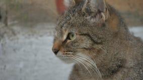 Obdachlose Katze des Porträts auf der Straßennahaufnahme schaut das Sitzen traurig stock footage