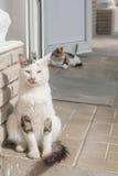 Obdachlose Katze, die auf der Straße am Eingang zum Speicher sitzt und betrachtet, was geschieht Stockfotos