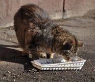 Obdachlose Katze isst Lebensmittel Lizenzfreie Stockfotos