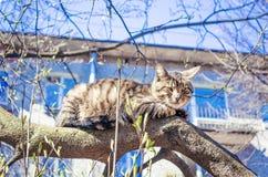 Obdachlose Katze liegt auf einem Baum lizenzfreies stockbild
