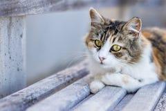 Obdachlose Katze liegt auf einer Bank auf dem Strand Stockbilder