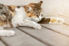 Obdachlose Katze liegt auf einer Bank auf dem Strand Stockfotos