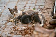 Obdachlose Katze mit Kätzchen stockfoto