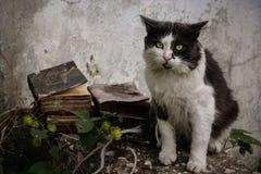 obdachlose Katze und Bücher Stockbilder