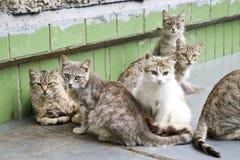 Obdachlose Katzen der Straße haben zusammen in einem Satz die Köpfe zusammengesteckt und untersuchen vorsichtig den Rahmen mit Vo lizenzfreies stockbild