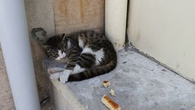 Obdachlose Katzenlügen oben gekräuselt und Versuche, um, nahe bei einer Scheibe brot zu schlafen Das Problem des Obdachlosen, nie stock video footage